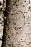 Carving on a tree trunk. The bark of a birch tree has an etched heart with the carving of several names indicated a romance royalty free stock images