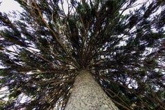 Bark, Branches, Environment Stock Image