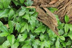 Bark and bush closeup Royalty Free Stock Images