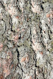 Bark of cedar. Background Royalty Free Stock Photo