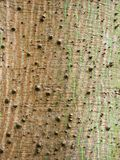 Bark of the Ceiba pentandra or White Silk-Cotton Tree Stock Images
