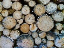 Bark, Chopped, Circle royalty free stock photo