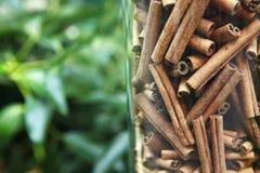 Bark of cinnamon. Seasoning for kitchen. Bark of a cinnamon Royalty Free Stock Image
