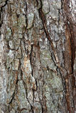 Bark. Close picture of old tree surface lit by sun at summer day Stock Photo