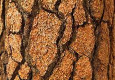 Bark: Close-up Stock Photo