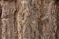 Bark close up. Of texture Royalty Free Stock Photos