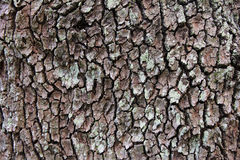The bark Royalty Free Stock Photography