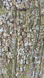 Bark. Close up of green and blue growth on tree bark Royalty Free Stock Images