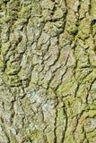 Bark. Close up image of the bark of an oak tree Stock Photo