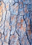 Bark closeup background. Royalty Free Stock Image
