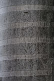 Bark of coconut tree trunk texture background. Bark of coconut tree trunk textured background Royalty Free Stock Photos