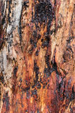 Bark. Complimentary colours in bark of tree Royalty Free Stock Image