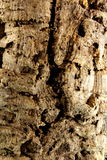 Bark of the cork oak texture Stock Images