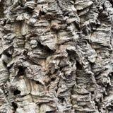 The bark of the cork tree. Stock Photos