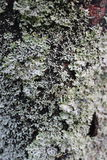 Bark covered with moss. Close upTree bark covered with moss Stock Image