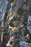 Bark covered with moss Stock Image