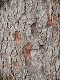 Bark crack Royalty Free Stock Images
