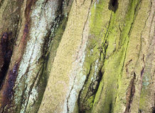 Bark in detail. Colourful bark of a tree in detail Stock Photos