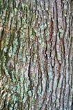 Bark detail close up Stock Photo
