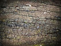 Bark, Detail, Dry Royalty Free Stock Image