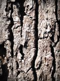 Bark, Detail, Dry Royalty Free Stock Photography
