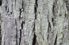Bark Detail Stock Image