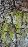 Bark detail. Bark , detail, pattern Royalty Free Stock Images
