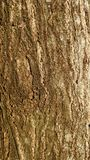 Bark detail texture Royalty Free Stock Photo