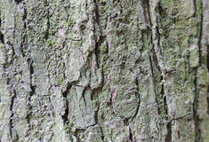 Bark details Royalty Free Stock Photos
