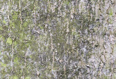 Bark details Stock Images