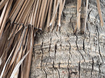 Bark and dry coconut palm leaf Royalty Free Stock Photos