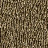 Elm Bark. Seamless Texture. Stock Image