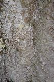 Bark of Elm. Seamless Tileable Stock Photos