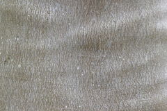 Bark of Elm. Seamless Tileable Texture. Royalty Free Stock Images