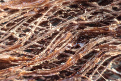 Bark fibers macro Stock Photos