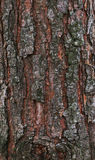 The bark of a forest pine. The bark with knot of a forest pine stock photos