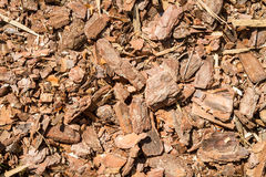 Bark forest Shred Royalty Free Stock Image