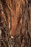 Bark of Forman Eucalyptus, tree of Western Australia Stock Photography