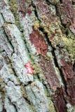 Bark Fungus Royalty Free Stock Photos