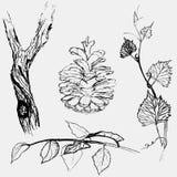 Bark of a grape, leaves, a bump. Hand drawn isolated Stock Photos