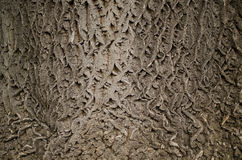 Bark gray texture. Abstract. Background Royalty Free Stock Photography