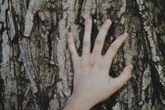 Bark hand Royalty Free Stock Photography
