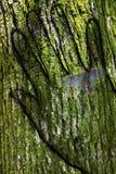 Bark hand. The hand in wood bark Stock Image