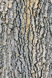 Bark hard wood texture Stock Photography