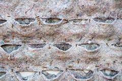 Bark hard wood texture Royalty Free Stock Photos