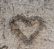 Bark heart. A heart drawn on the bark of trees Stock Photography