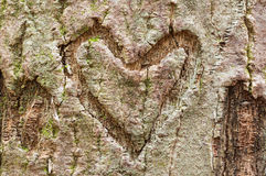 Bark Heart Stock Photos