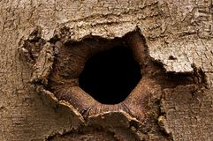 Bark hole Royalty Free Stock Image