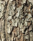 Bark of a larch Royalty Free Stock Photos