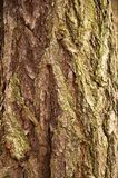 Bark of a larch Stock Image